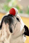 prezzi corsi di educazione per cani